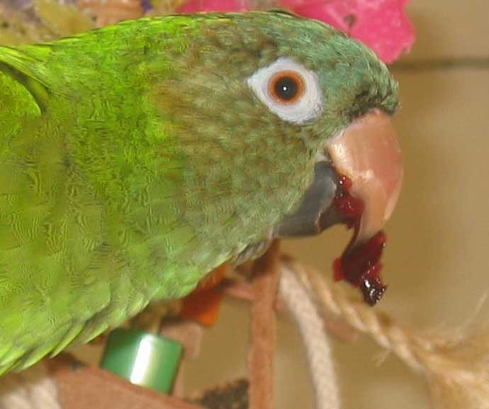 how to train parrot not to bite